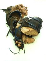 Processed Leather, 'Oded Arama' Shoe.55 x 29 x 12 cm2014