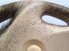 David's Toyota Delight, Pig's hair on leather, mix media, diameter42x7cm, 2009, Detail