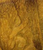 Adult female- Anacridium aegyptium, Watercolor, Gouache, Pencil on paper,120.5x70cm, 2007, Detail